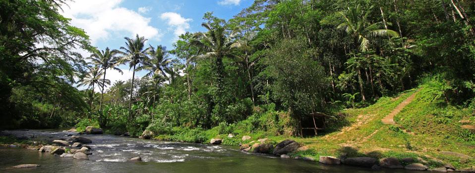ジャングル・リトリート・ウブド画像